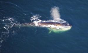 Walvis bron: NOAA